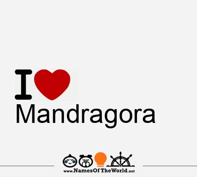 Mandragora