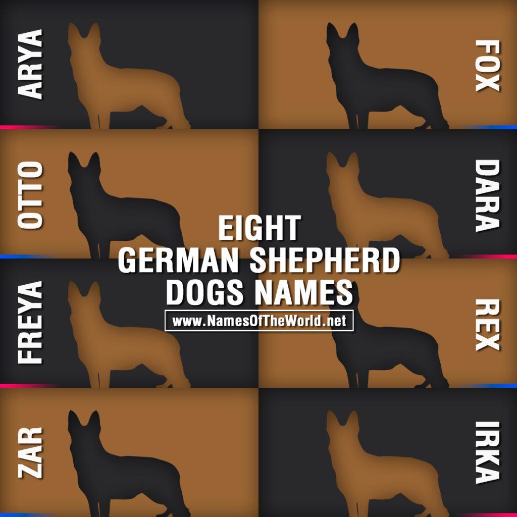 8-german-shepherd-dogs-names